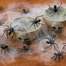 08478_SpiderWeb3_RE130.jpg